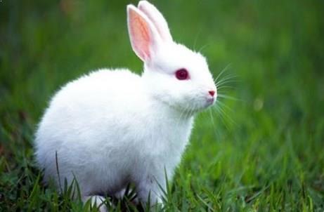 tips cara ternak kelinci